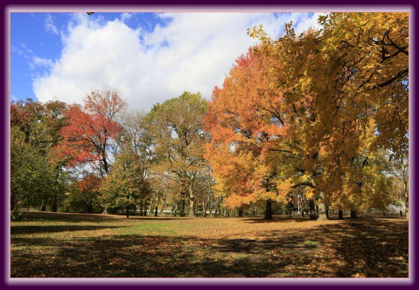 秋色满满的凯辛娜公园_图1-15