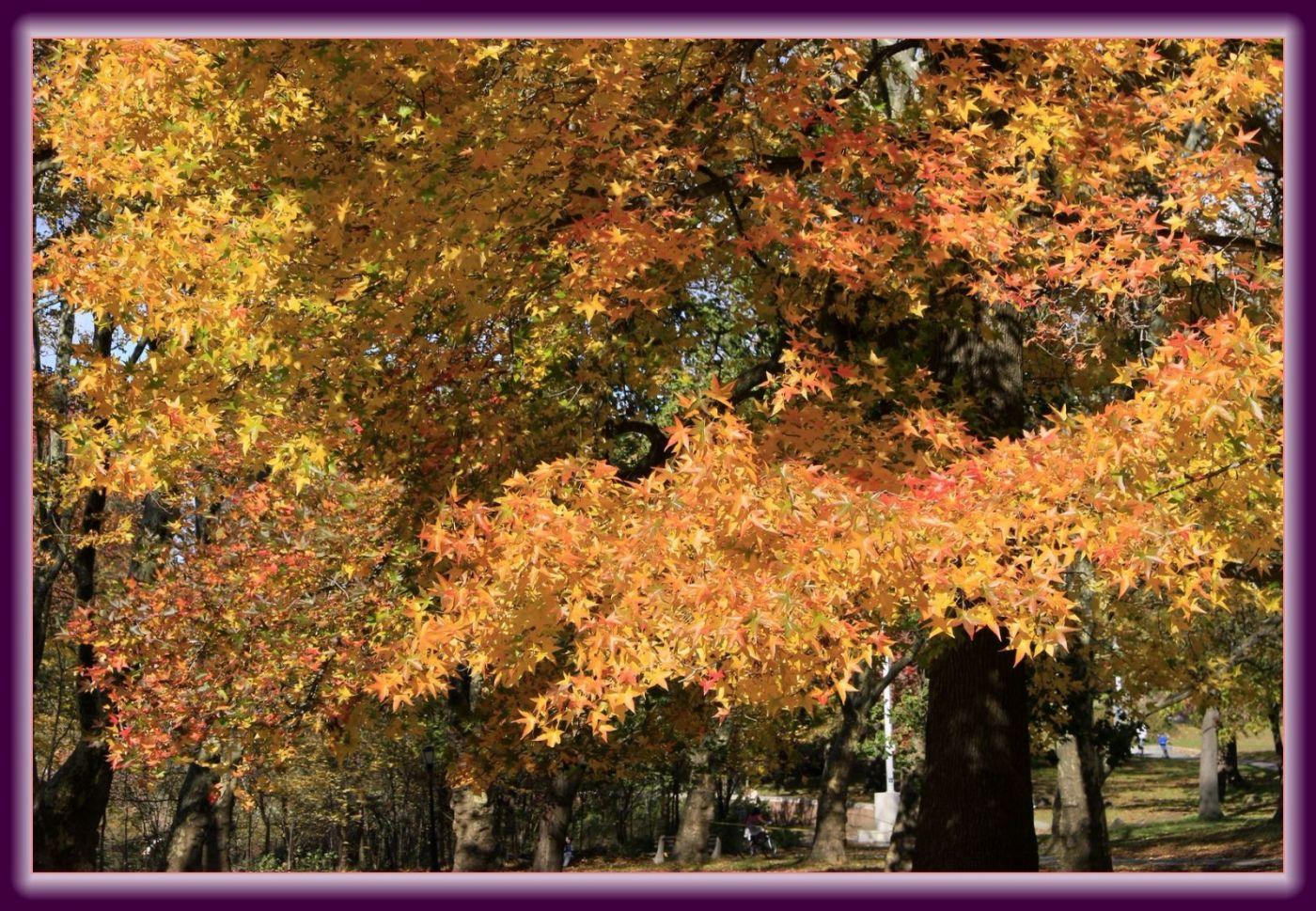 秋色满满的凯辛娜公园_图1-16