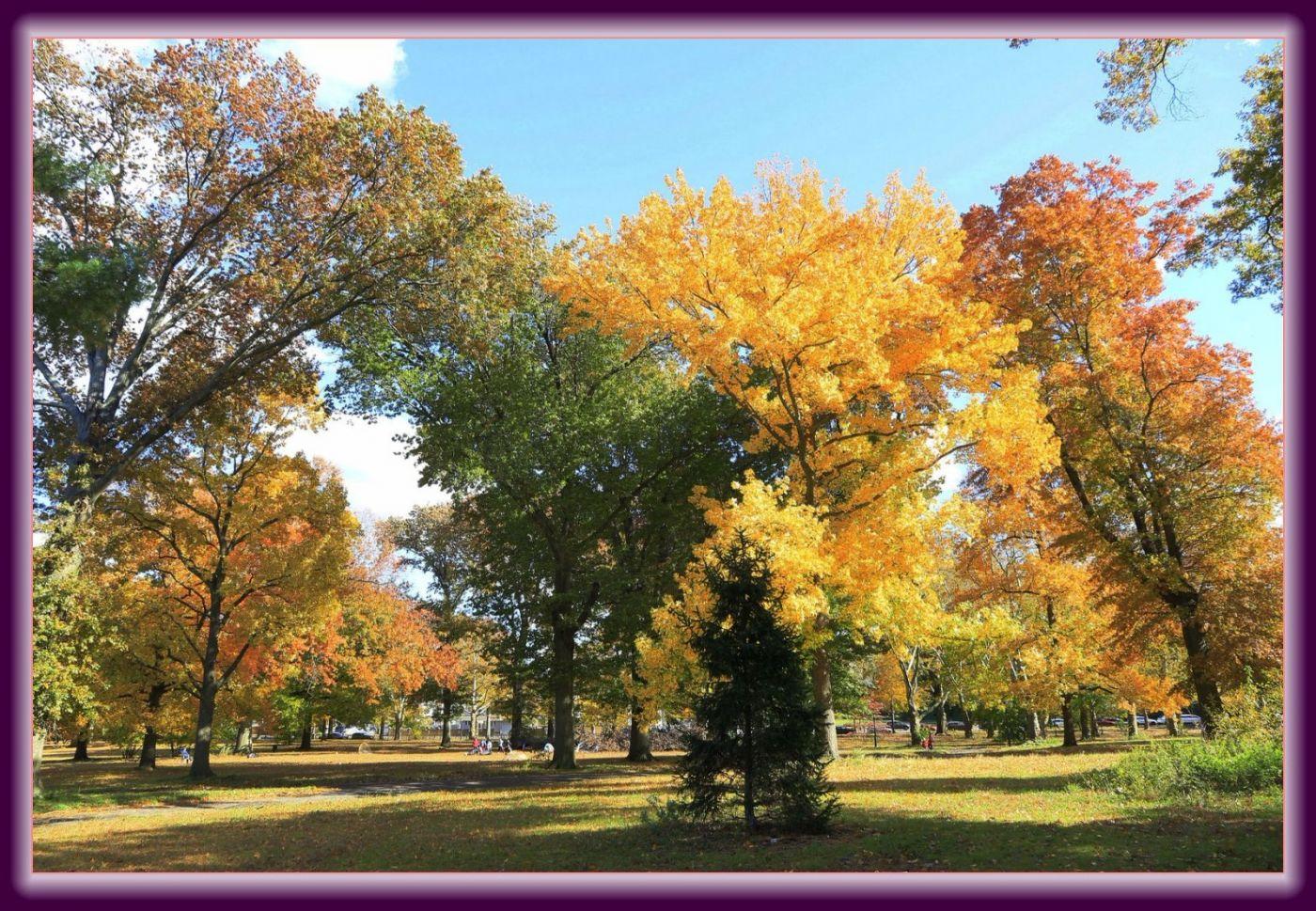 秋色满满的凯辛娜公园_图1-18