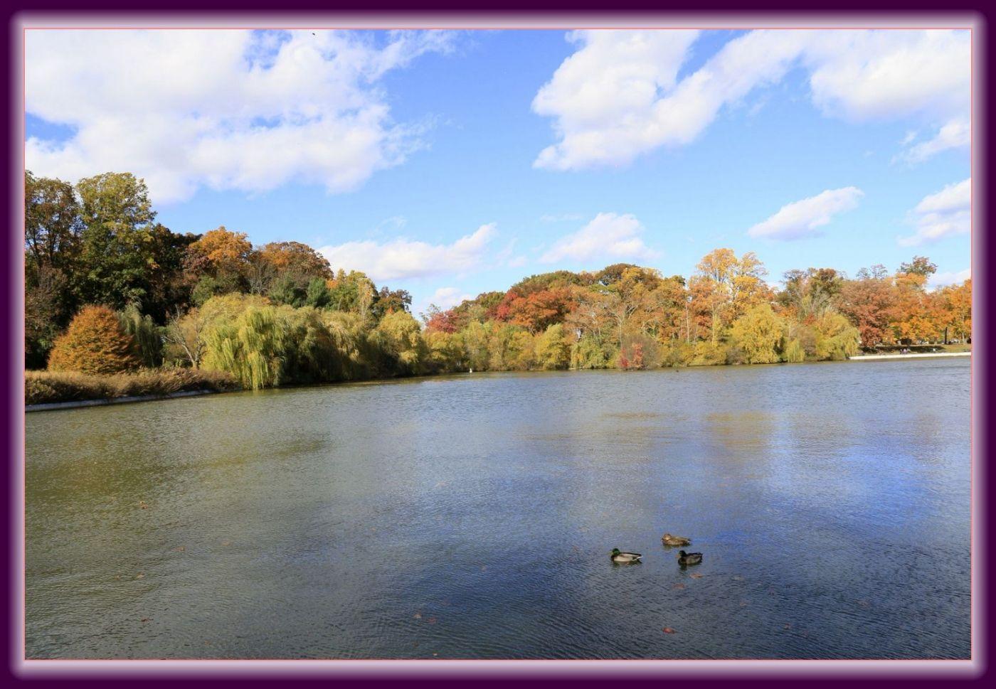 秋色满满的凯辛娜公园_图1-19