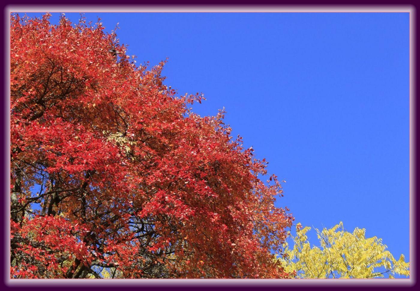 秋色满满的凯辛娜公园_图1-20