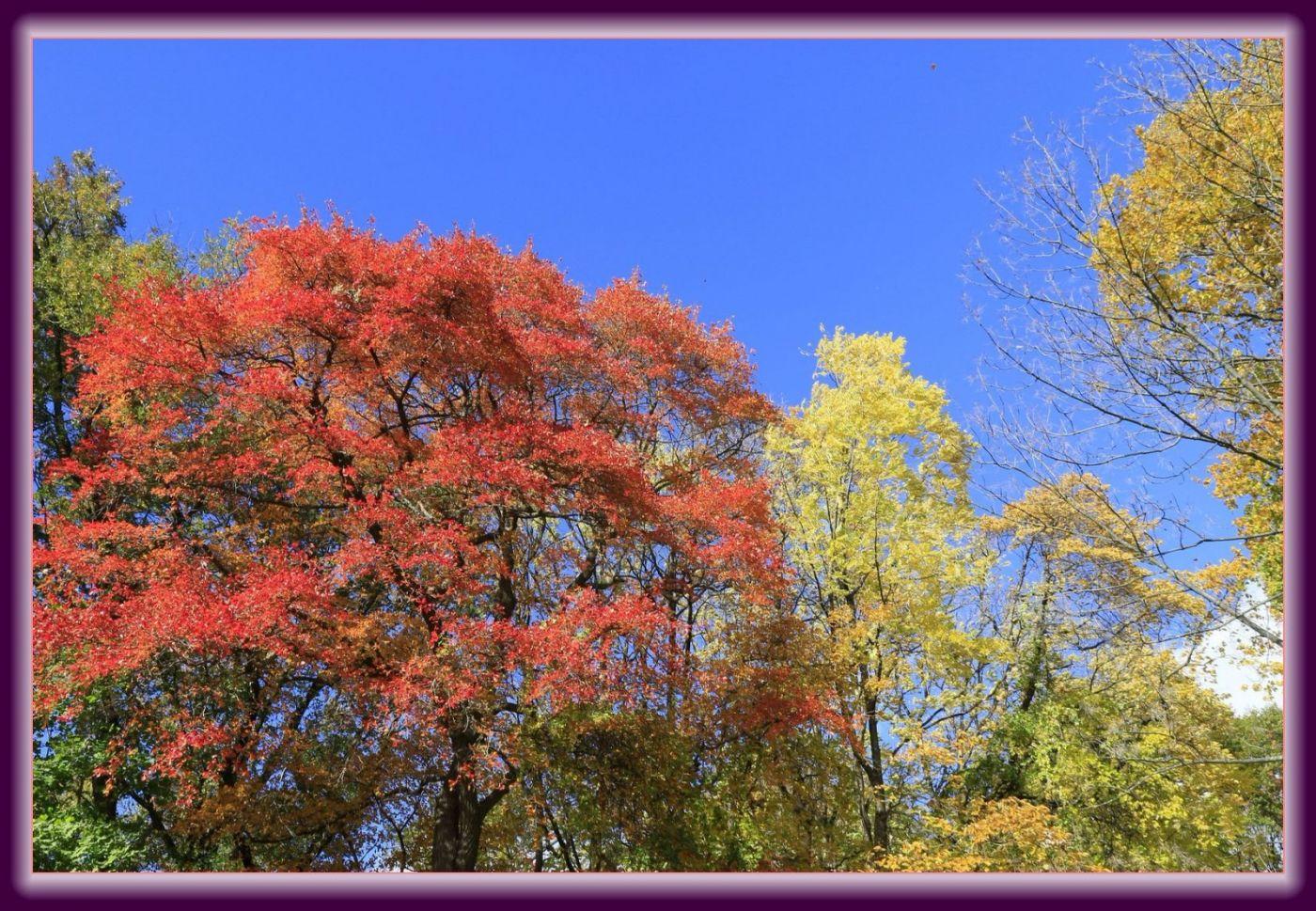 秋色满满的凯辛娜公园_图1-21