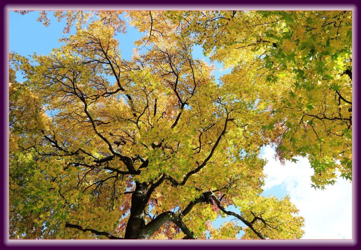 秋色满满的凯辛娜公园_图1-22