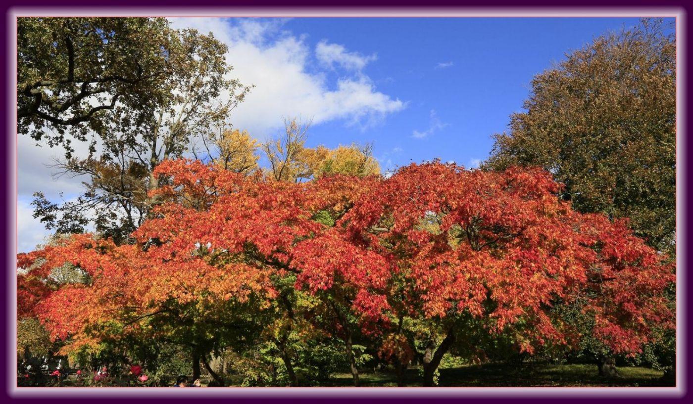 秋色满满的凯辛娜公园_图1-23