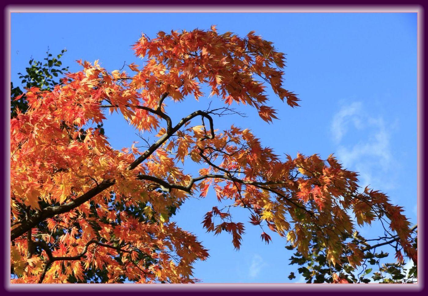秋色满满的凯辛娜公园_图1-24