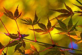 一窥的秋色