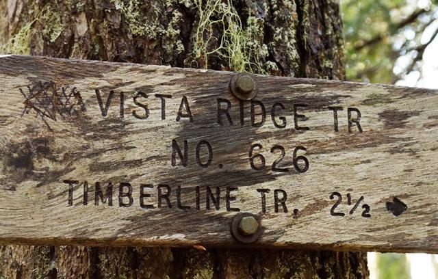 Vista Ridge Trail 步道-野花丛生_图1-3