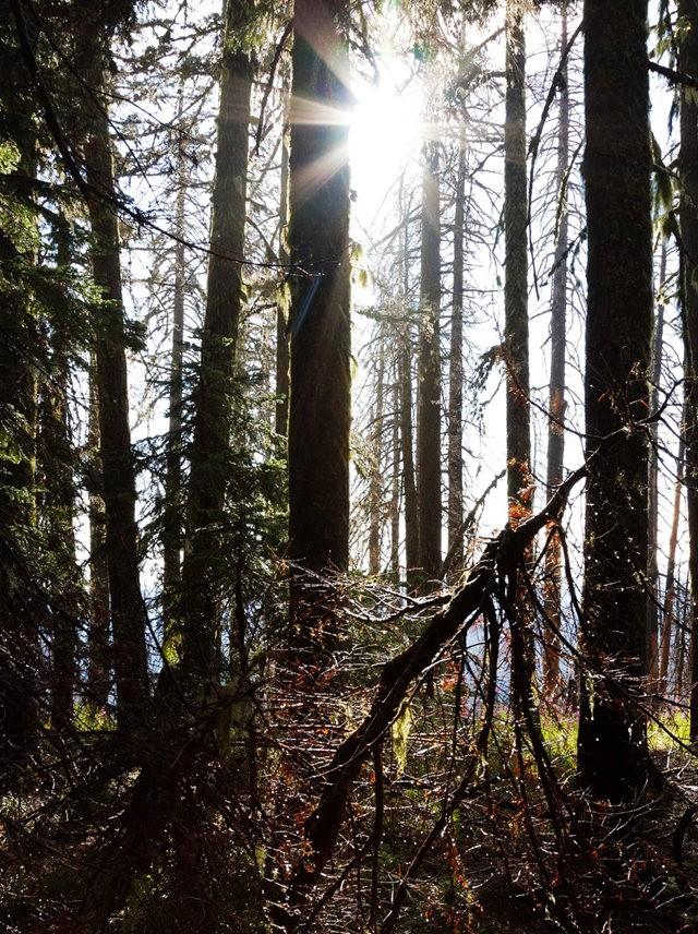 Vista Ridge Trail 步道-野花丛生_图1-4