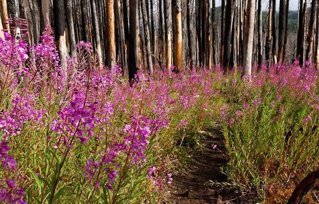 Vista Ridge Trail 步道-野花丛生_图1-10