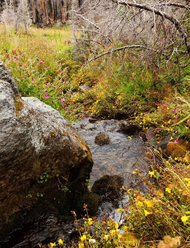 Vista Ridge Trail 步道-野花丛生_图1-15
