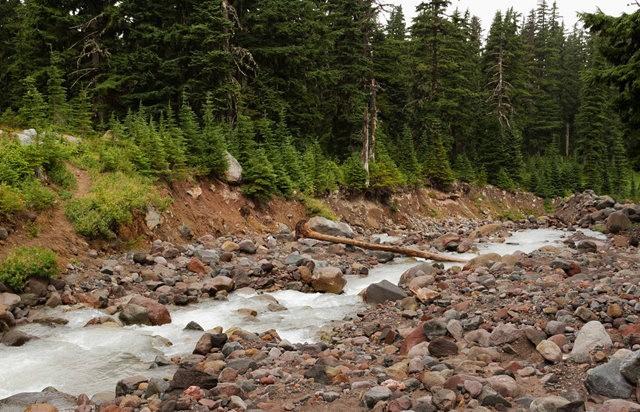 Vista Ridge Trail 步道-野花丛生_图1-16