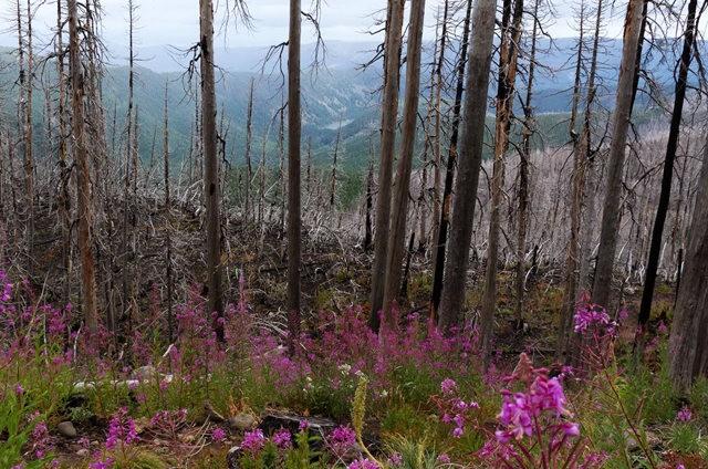 Vista Ridge Trail 步道-野花丛生_图1-24