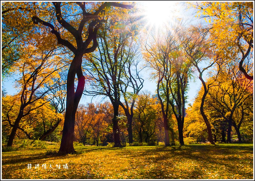 【龍的传人拍摄】秋雨过后中央公园中央路_图1-3