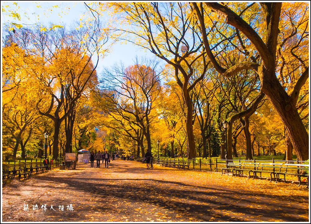 【龍的传人拍摄】秋雨过后中央公园中央路_图1-5