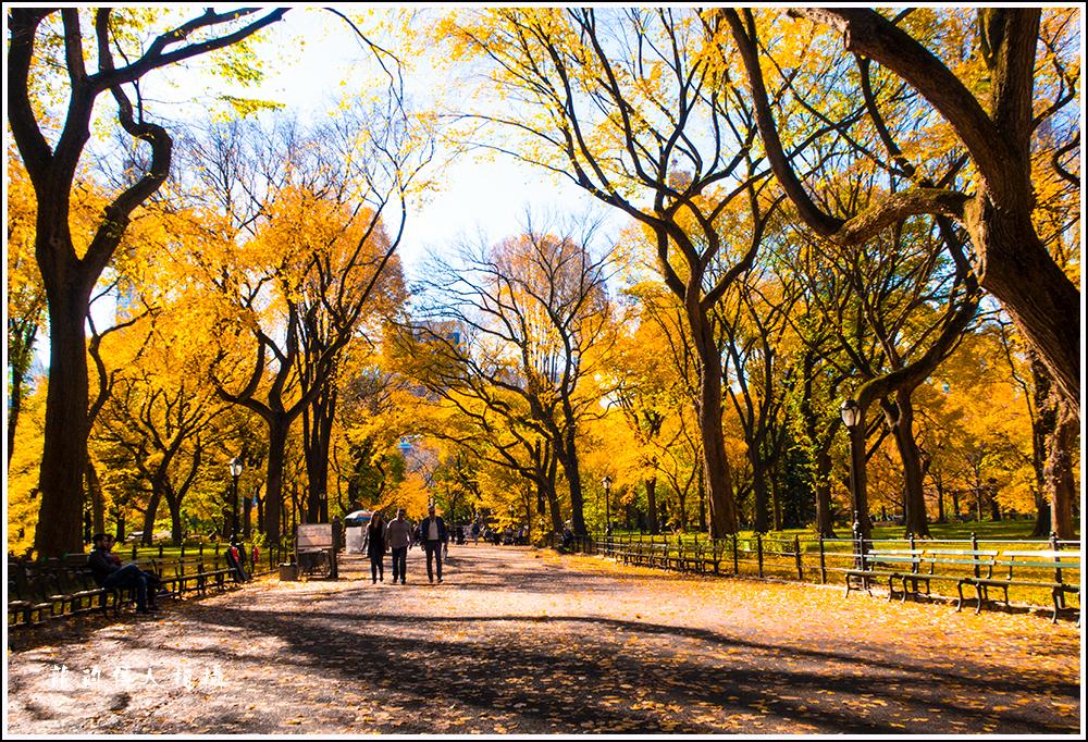 【龍的传人拍摄】秋雨过后中央公园中央路_图1-2