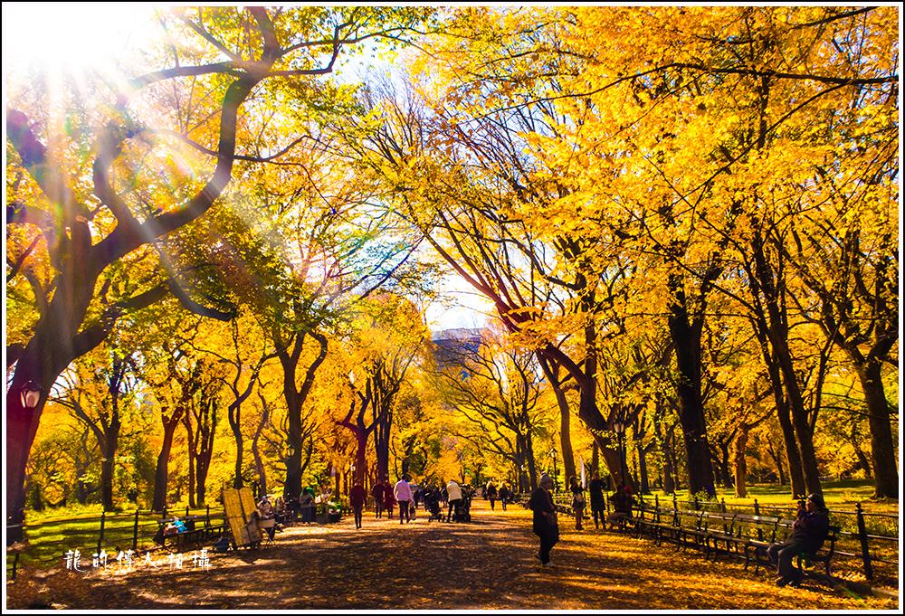 【龍的传人拍摄】秋雨过后中央公园中央路_图1-1