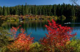 藤蔓枫叶Clear Lake 湖