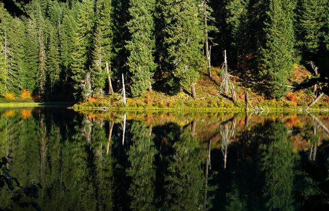 藤蔓枫叶Clear Lake 湖_图1-4