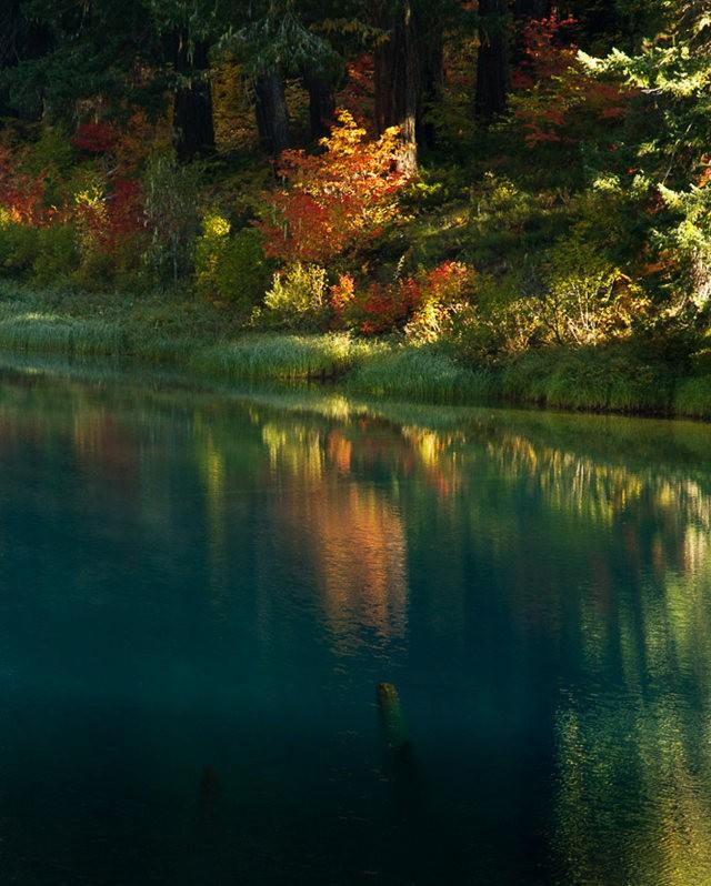 藤蔓枫叶Clear Lake 湖_图1-5
