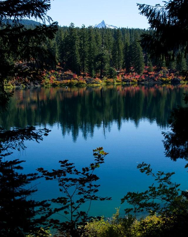 藤蔓枫叶Clear Lake 湖_图1-20