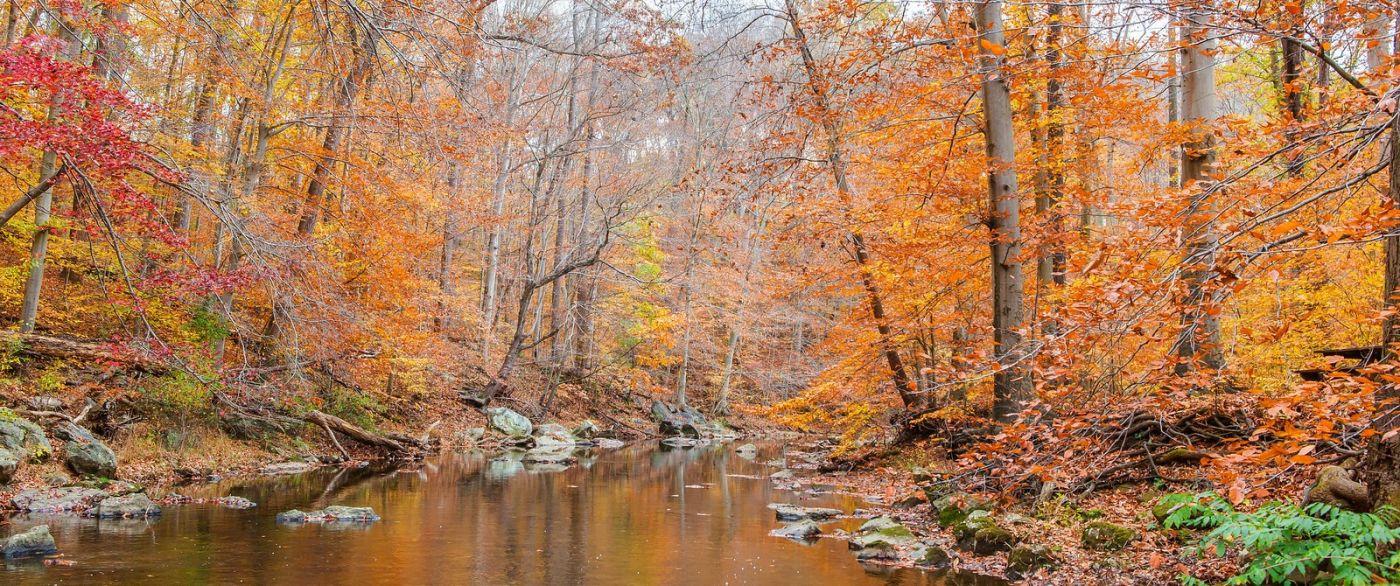秋天年年有,美景天天变_图1-5
