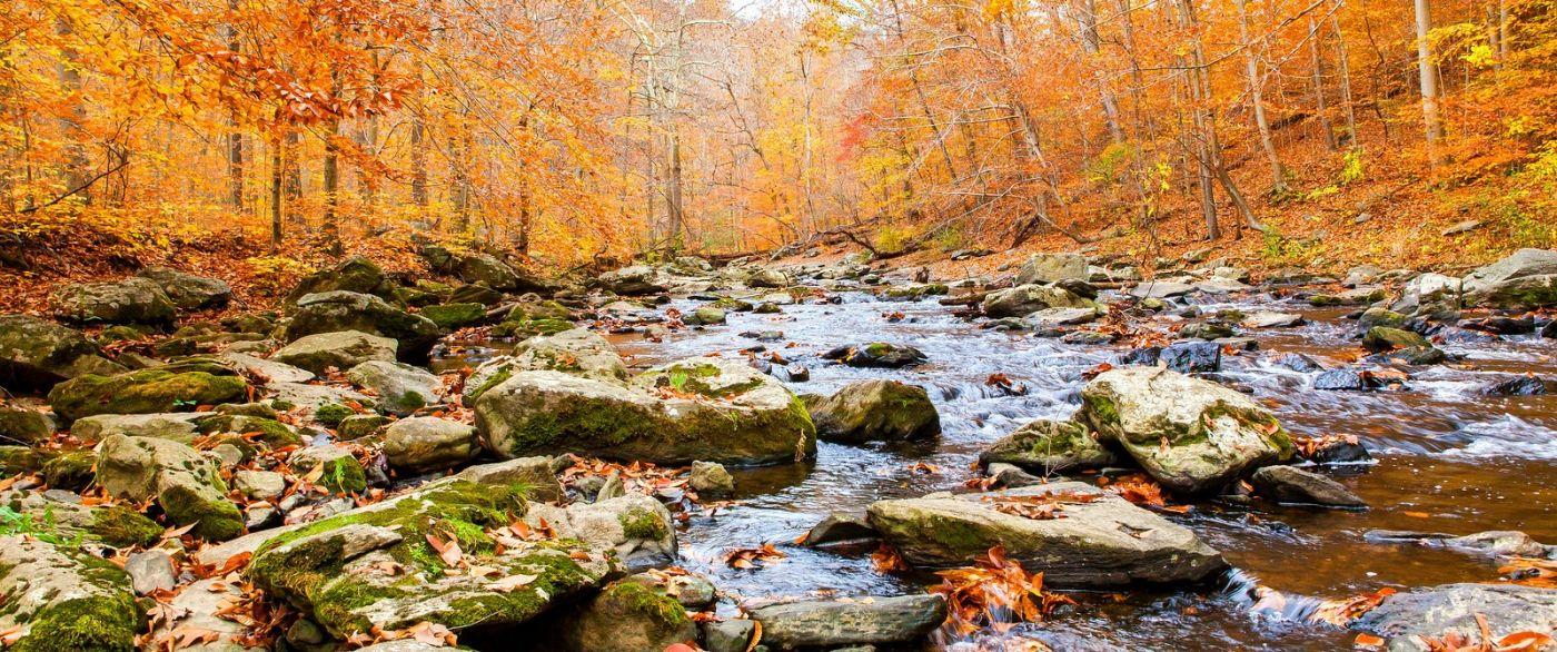 秋天年年有,美景天天变_图1-7