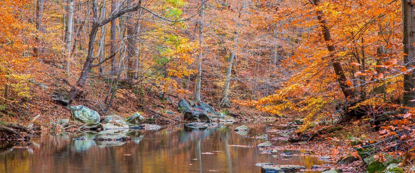 秋天年年有,美景天天变_图1-2