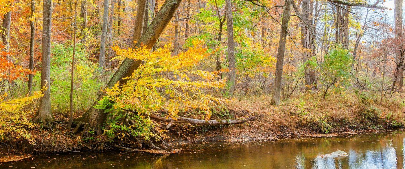 秋天年年有,美景天天变_图1-10