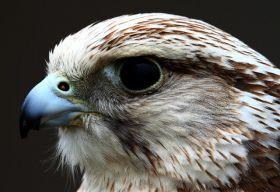 纽波特湿地国家自然保护区
