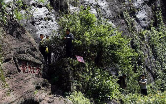 中国最值钱的一颗树:花上亿元买保险日夜有警卫保护,大红袍黄山迎客松副国级待遇 ... . ..._图1-1