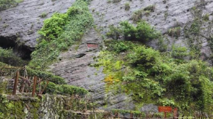 中国最值钱的一颗树:花上亿元买保险日夜有警卫保护,大红袍黄山迎客松副国级待遇 ... . ..._图1-2