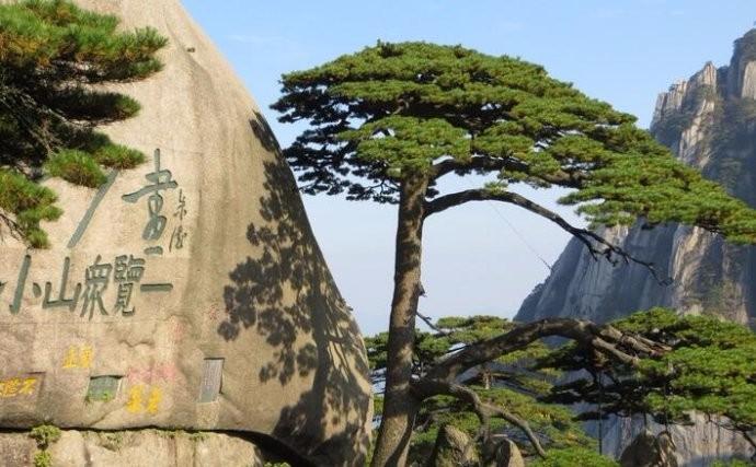 中国最值钱的一颗树:花上亿元买保险日夜有警卫保护,大红袍黄山迎客松副国级待遇 ... . ..._图1-6