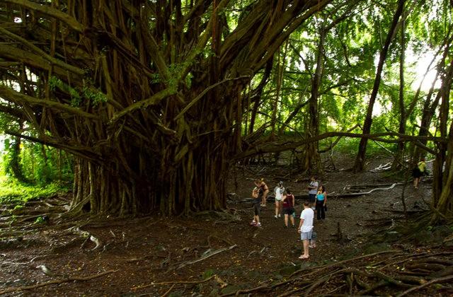 夏威夷大岛一行_图1-18