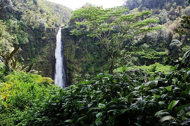 夏威夷大岛一行_图1-24