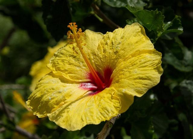 夏威夷大岛一行_图1-27