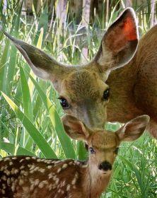 塞伦盖蒂国家公园的野生动物