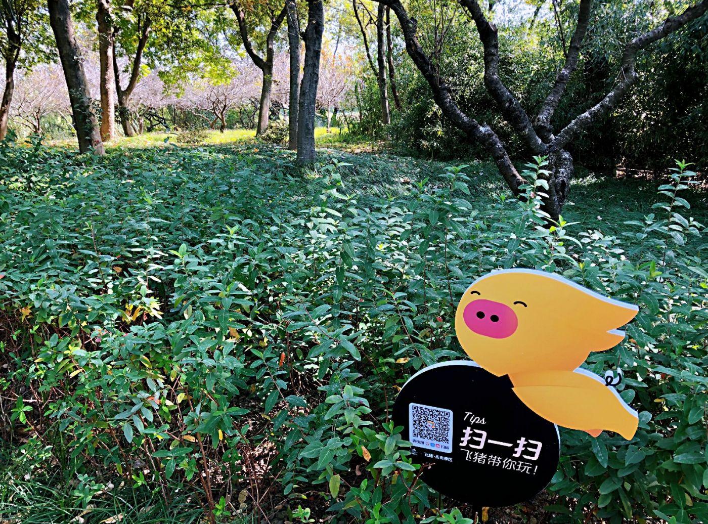 【田螺随拍】西溪湿地、非诚勿扰场景-手机版_图1-4