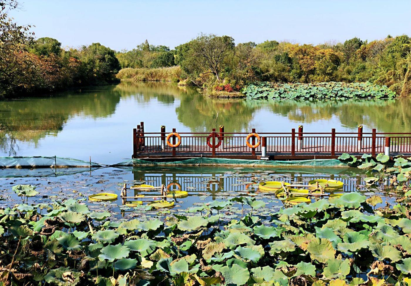 【田螺随拍】西溪湿地、非诚勿扰场景-手机版_图1-19