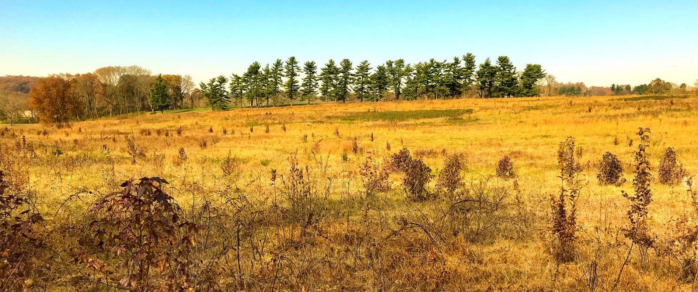 宾州的福吉谷,秋日的漫步 (手机摄影)_图1-16