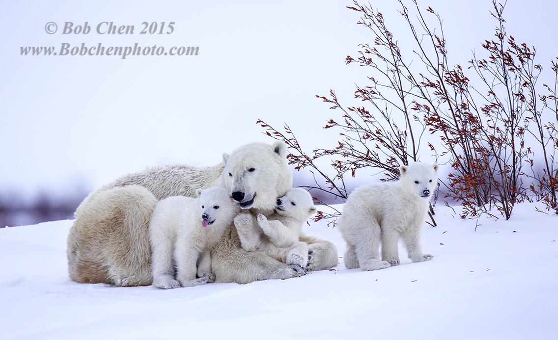 陳寶挺南北極攝影展_图1-10