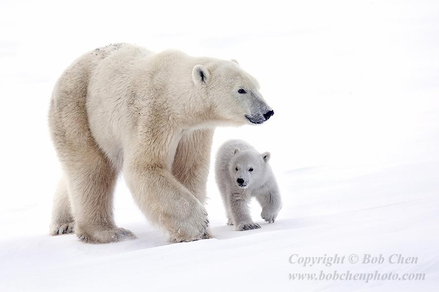 陳寶挺南北極攝影展_图1-8