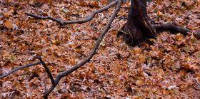 秋又悄悄的走了!