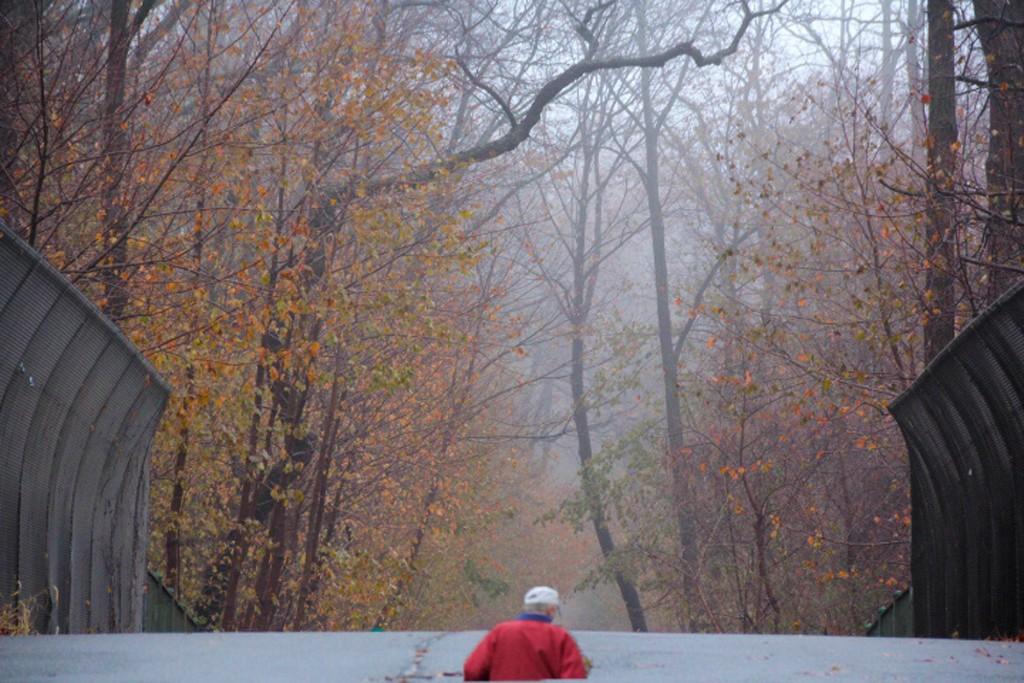秋又悄悄的走了!_图1-2