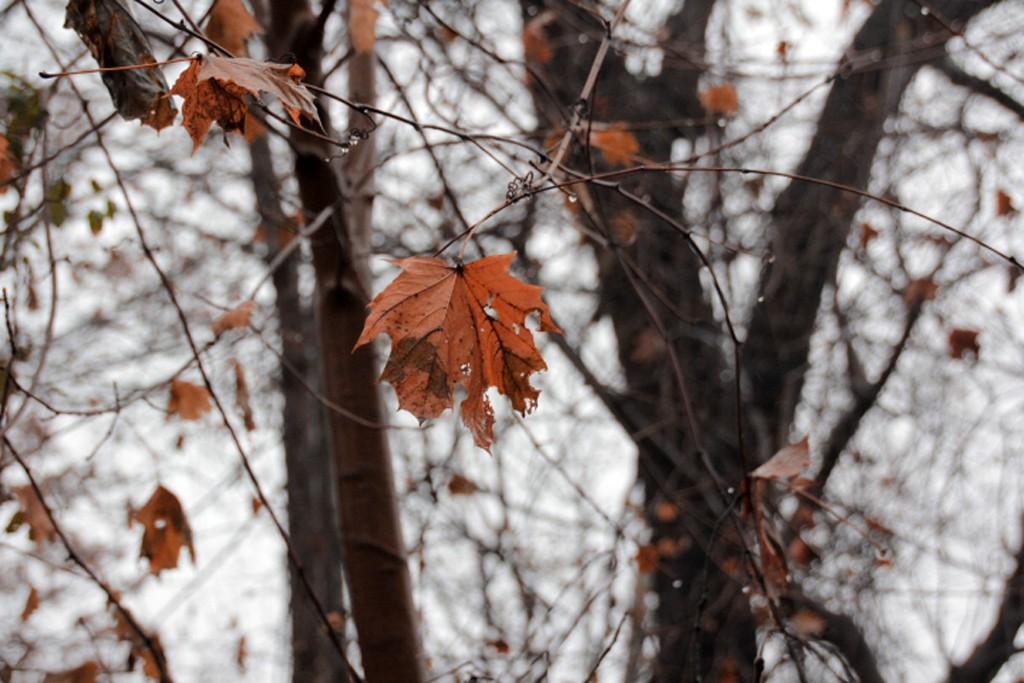 秋又悄悄的走了!_图1-6