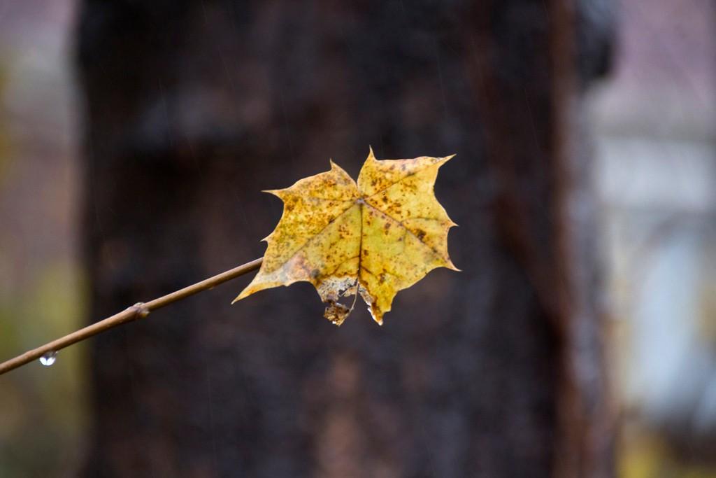 秋又悄悄的走了!_图1-5