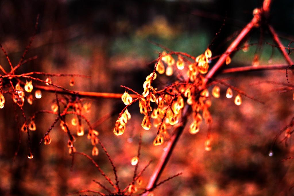 秋又悄悄的走了!_图1-8