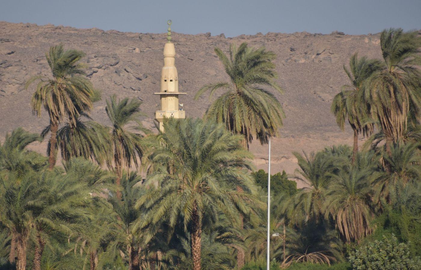 埃及尼罗河风光_图1-3