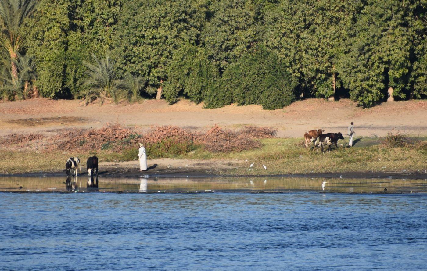 埃及尼罗河风光_图1-7