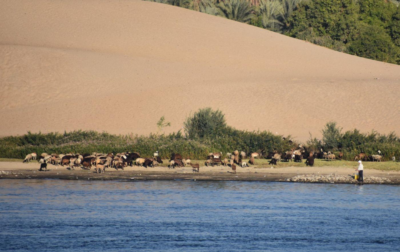 埃及尼罗河风光_图1-9