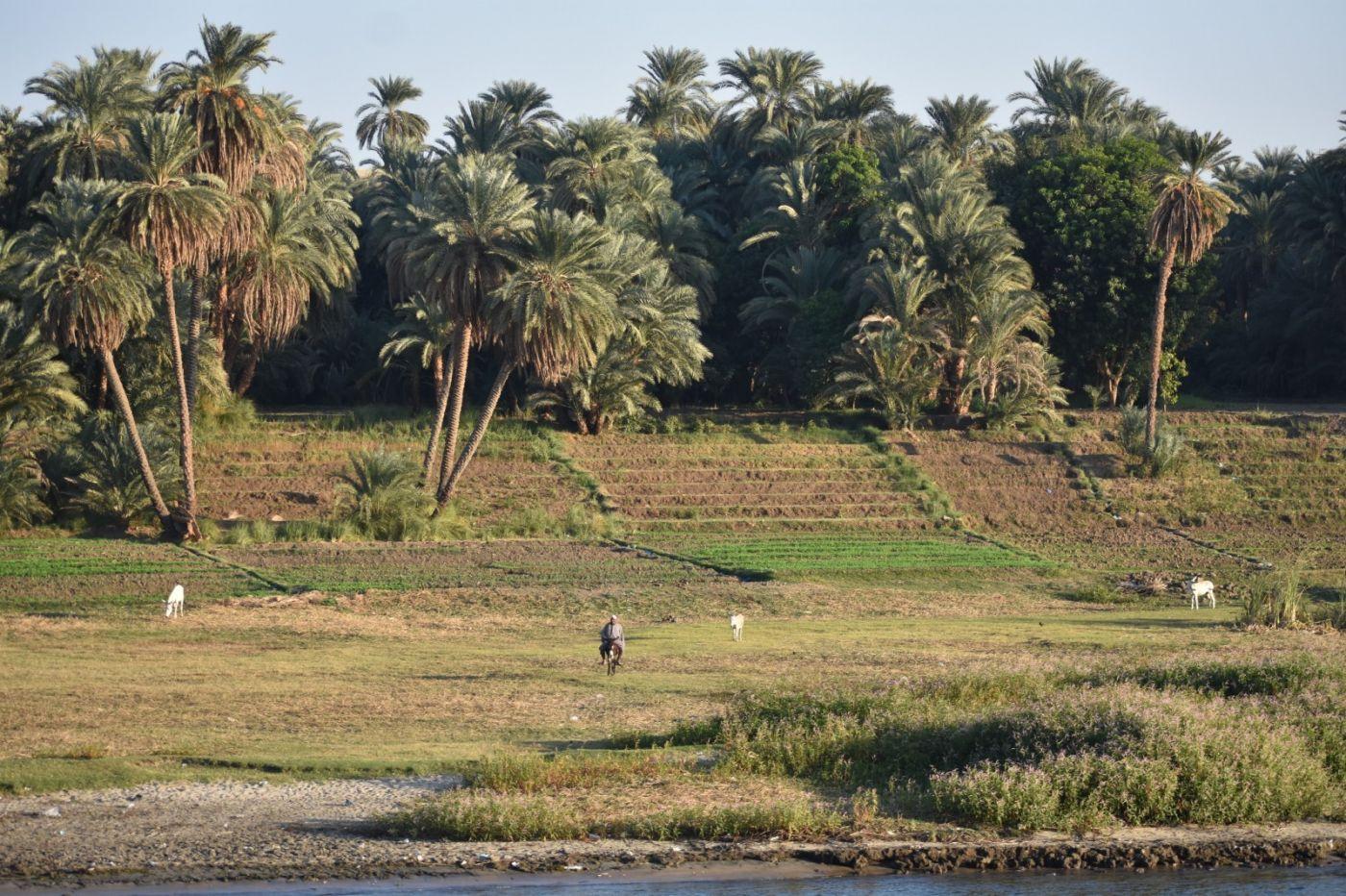 埃及尼罗河风光_图1-14